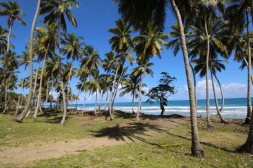 Prime Beachfront Land near Cabarete