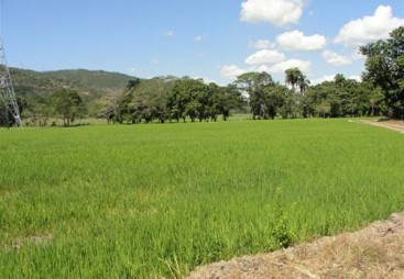 Rice Farm with over 15000 acres for sale - San Francisco-Nagua