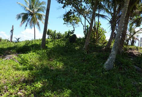 #1 Beachfront property with 3 x 2-Story Houses in Cabarete