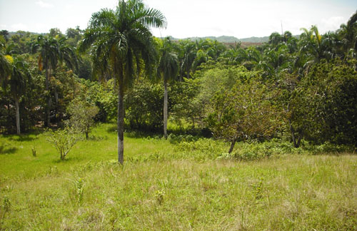 #1 Small Farmland with Marvellous View Sosua