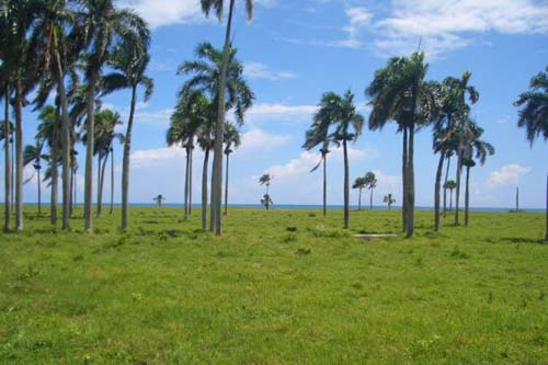 #5 Stunning Beachfront Land With Wide Frontage