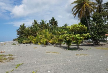 Beachfront land in a quiet area of high quality properties - Bani