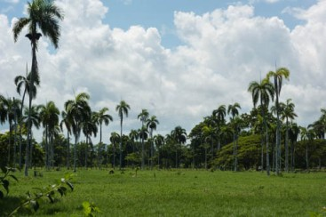 Very nice farmland near Cabarete