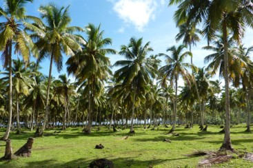 Stunning beachfront land with wide frontage in Samana