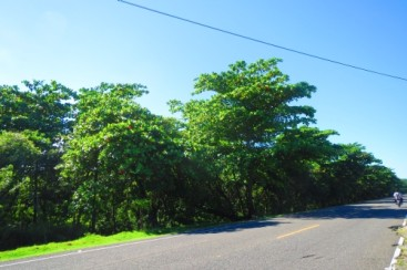 Prime development land located on main highway close to Cabarete