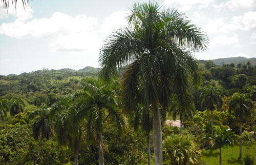#2 Small Farmland with Marvellous View Sosua