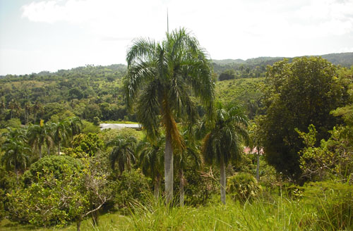 #0 Small Farmland with Marvellous View Sosua