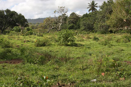 #2 Beachfront Project Opportunity in Cabarete