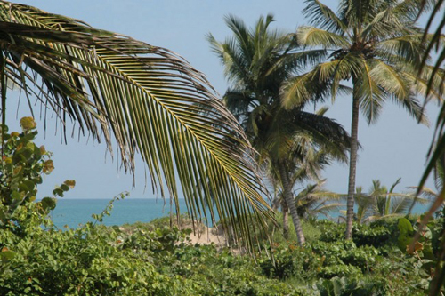 #1 Beachfront Project Opportunity in Cabarete