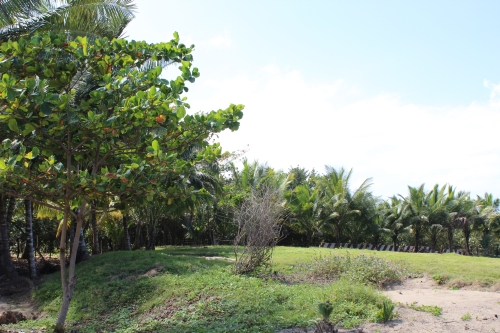 #6 Kite Beach Property - Prime beachfront land with wide frontage