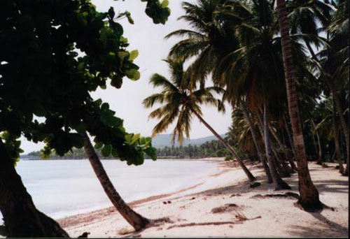 #7 Magnificent beach front land near Samana