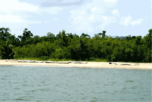 #1 Magnificent beach front land near Samana