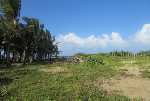 #4 Beautiful and well-proportioned beachfront lot at the kite beach Cabarete