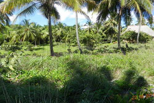 #2 Oceanfront Land in unspoilt area of Samana